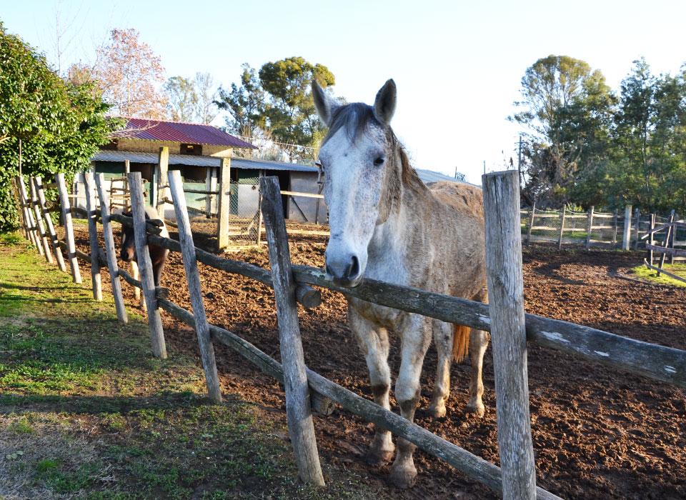 equus2