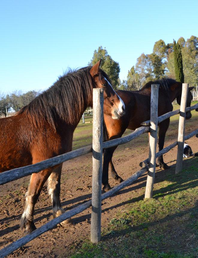 home-cavalli
